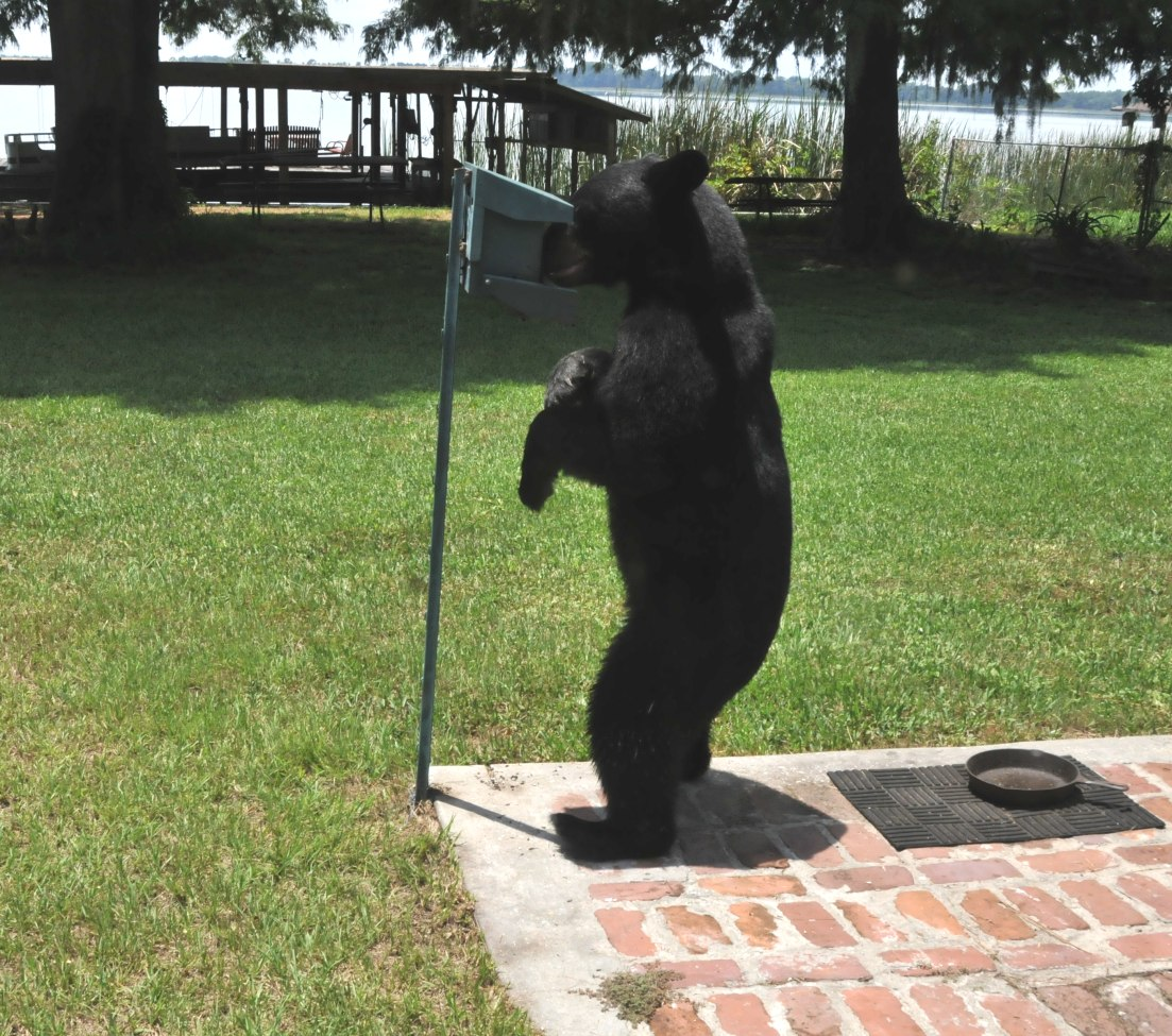 Bear - bird feeder