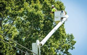 Duke Energy Tree Trim